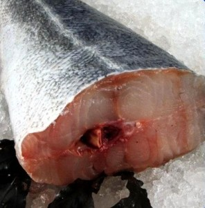 Lieu noir, poisson de février, peche durable