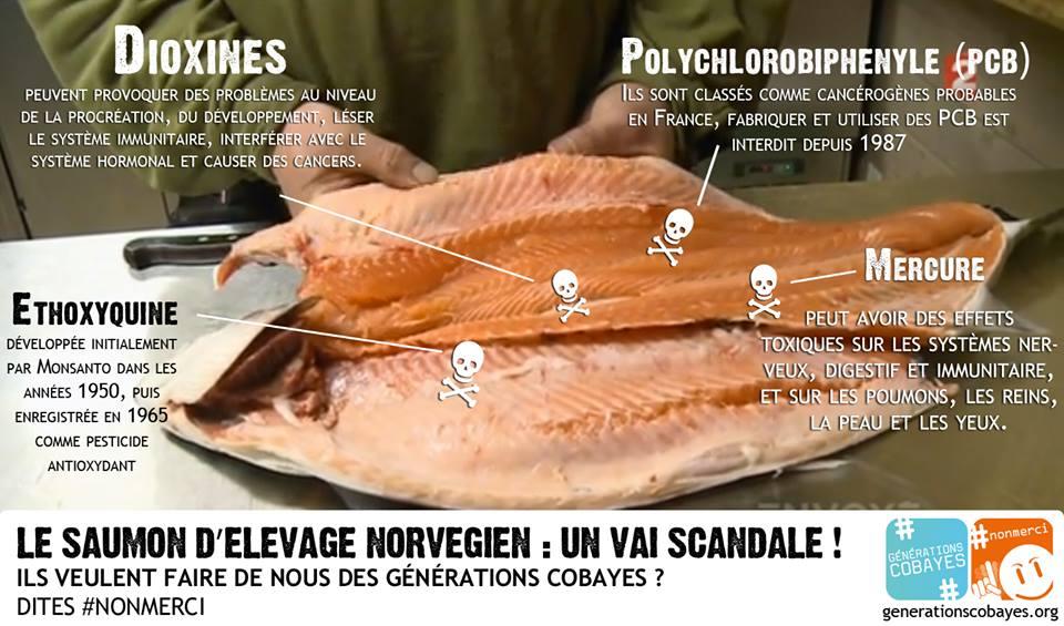 saumon-norvège