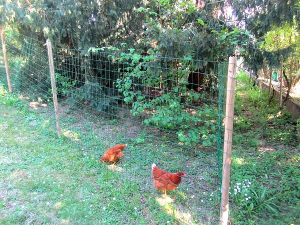 jardin-poules