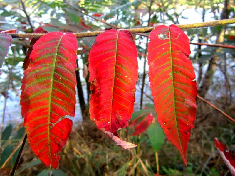 blagnac-garonne-automne